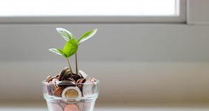 Geld-groeien-plant